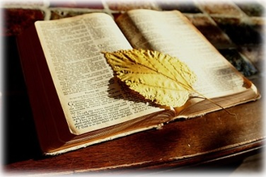 BLOG - Open Bible - Success